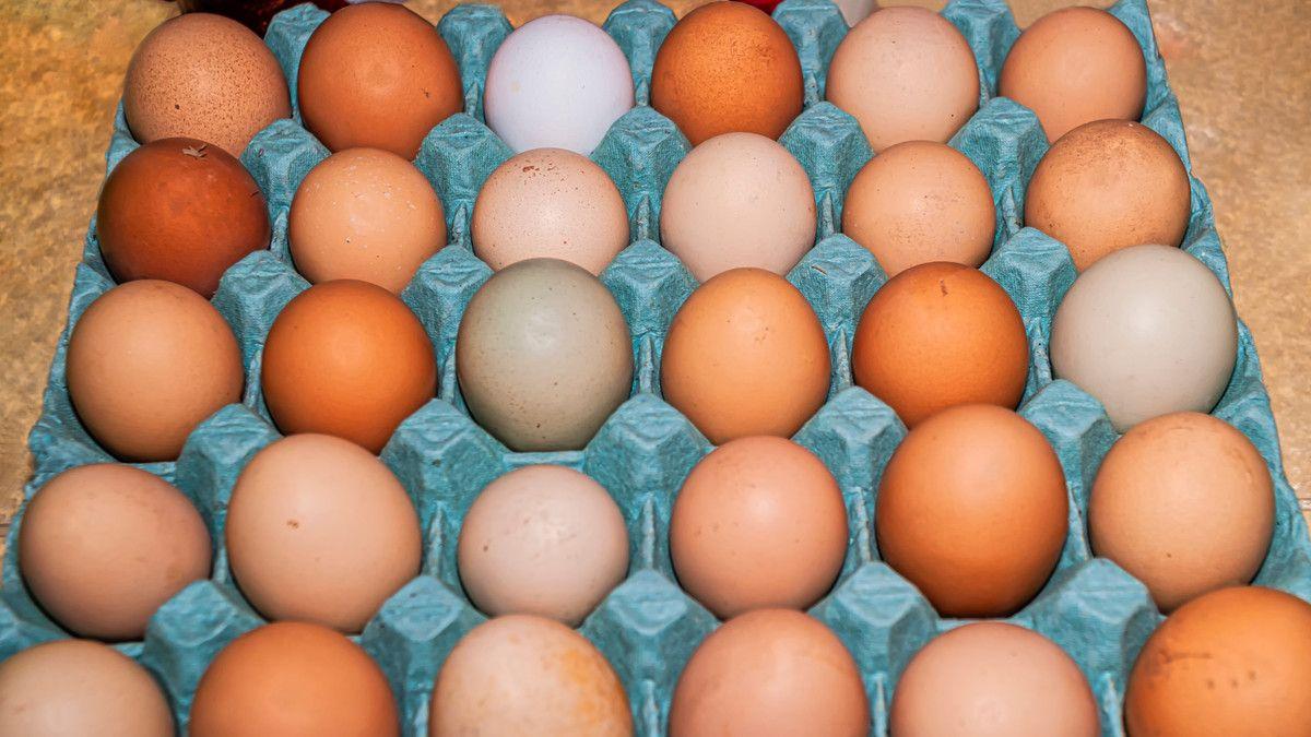 jenis jenis telur